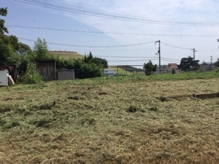 とりあえず、草刈りして、、、_f0079749_14501776.jpg