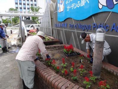 ガーデンふ頭総合案内所前花壇の植替えR2.7.22_d0338682_15020972.jpg