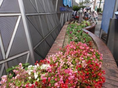 ガーデンふ頭総合案内所前花壇の植替えR2.7.22_d0338682_15060348.jpg