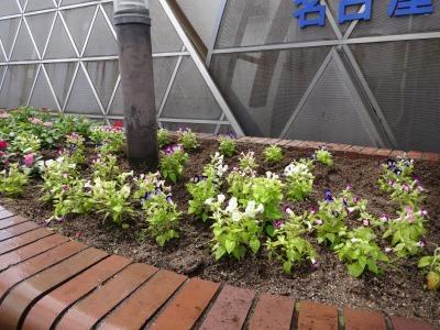 ガーデンふ頭総合案内所前花壇の植替えR2.7.22_d0338682_15061387.jpg