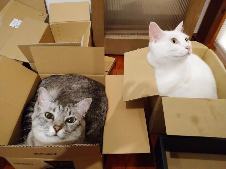 猫は液体_f0197985_00360754.jpg