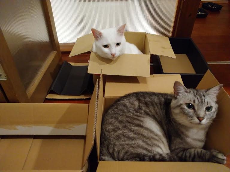 猫は液体_f0197985_00361080.jpg