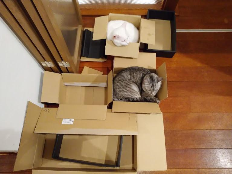 猫は液体_f0197985_00361261.jpg