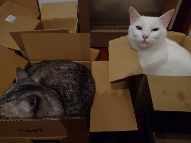 猫は液体_f0197985_00361565.jpg