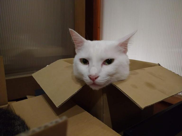 猫は液体_f0197985_00362011.jpg
