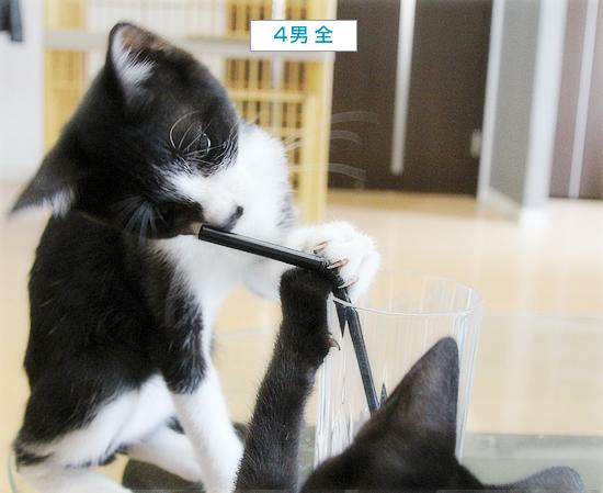 子猫のブーム_a0389088_16531075.jpg
