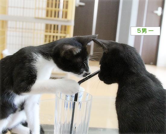 子猫のブーム_a0389088_16531091.jpg