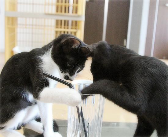 子猫のブーム_a0389088_16531118.jpg