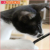子猫のブーム_a0389088_16531144.jpg
