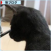 子猫のブーム_a0389088_16531191.jpg