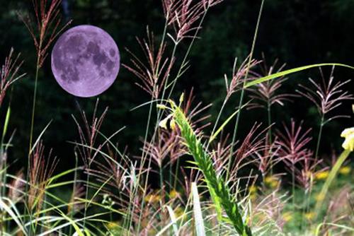 みずがめ座の満月!_e0362696_01032833.jpg