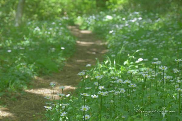5月の県森③**輝きの季節を歩く~ヨメナの道へ_b0197639_16312638.jpg