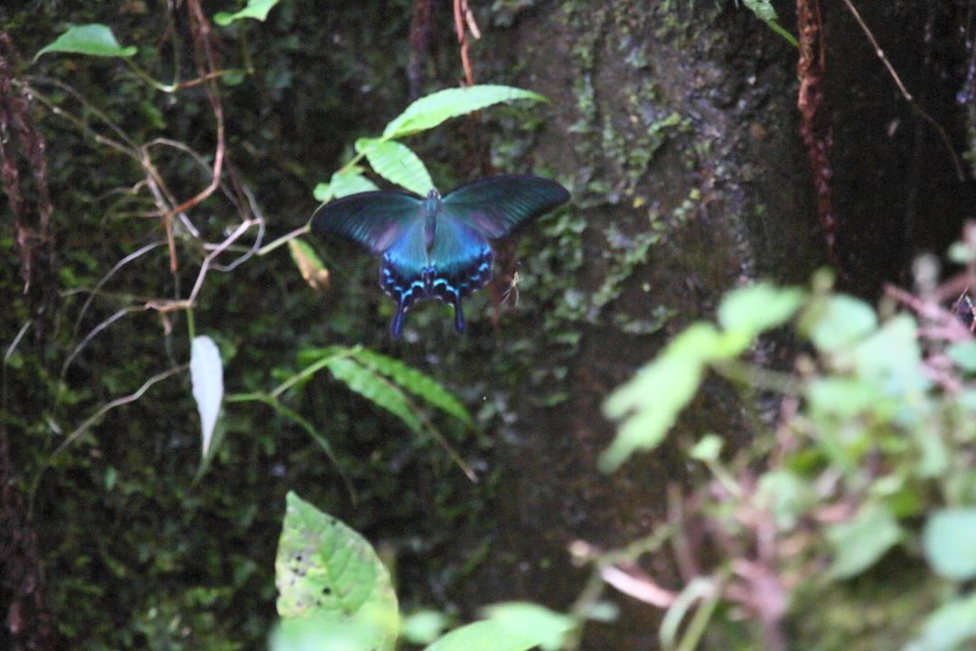 林道の蝶_e0403850_21400521.jpg