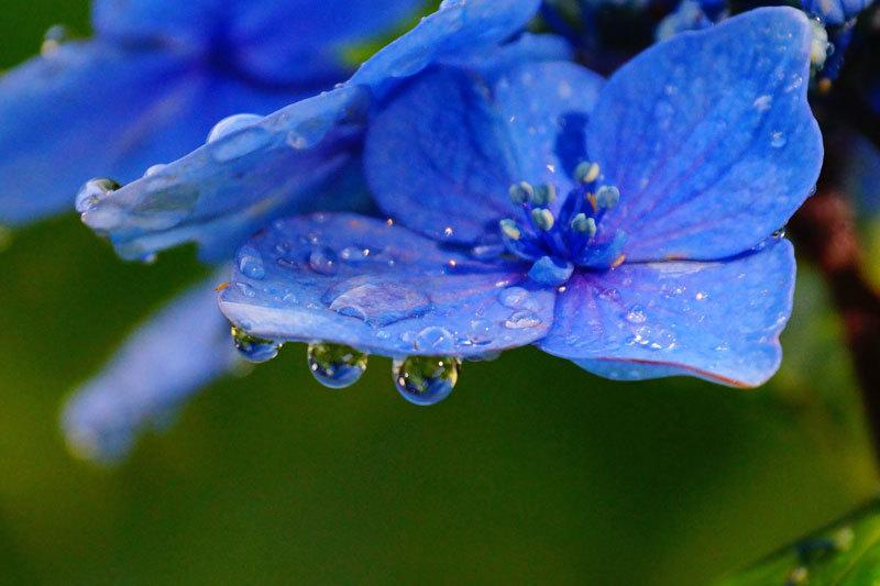 水滴_d0162994_08553053.jpg