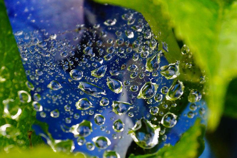 水滴_d0162994_08560715.jpg