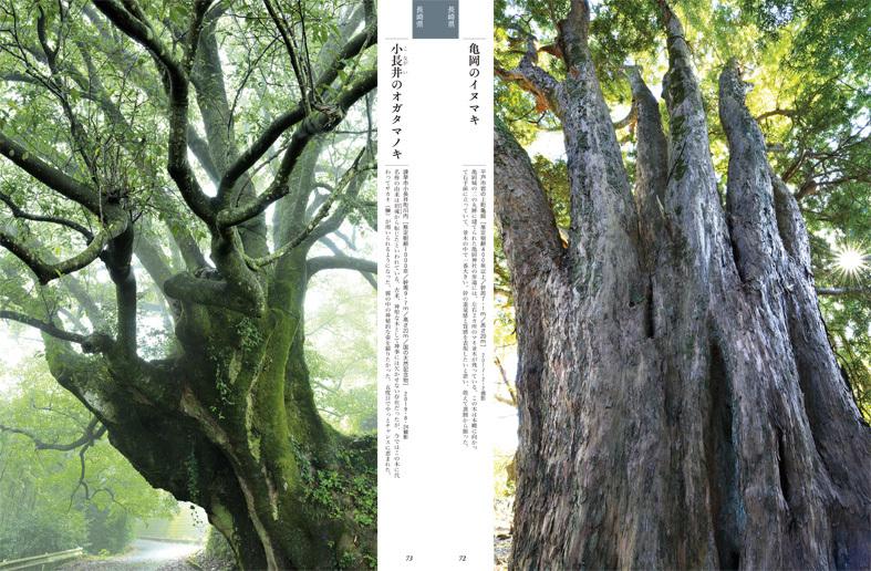 ■榊  晃弘写真集『九州・沖縄の巨樹』から【1】──福岡・佐賀・大分・長崎_d0190217_11424862.jpg