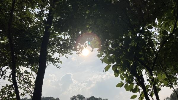 日々のコトの葉だより vol.6 〜夏はじまりました〜_b0174425_18541855.jpg