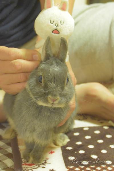 ちょっとウサギ休め_b0197639_14344885.jpg