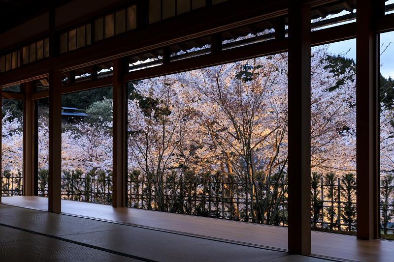 2020桜咲く京都 正壽院ライトアップ_f0155048_23542597.jpg