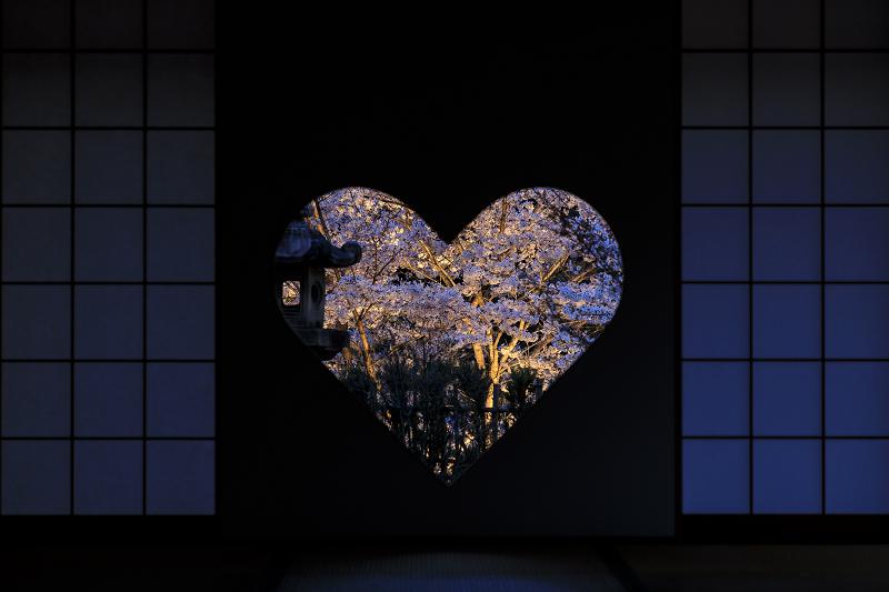 2020桜咲く京都 正壽院ライトアップ_f0155048_23544436.jpg