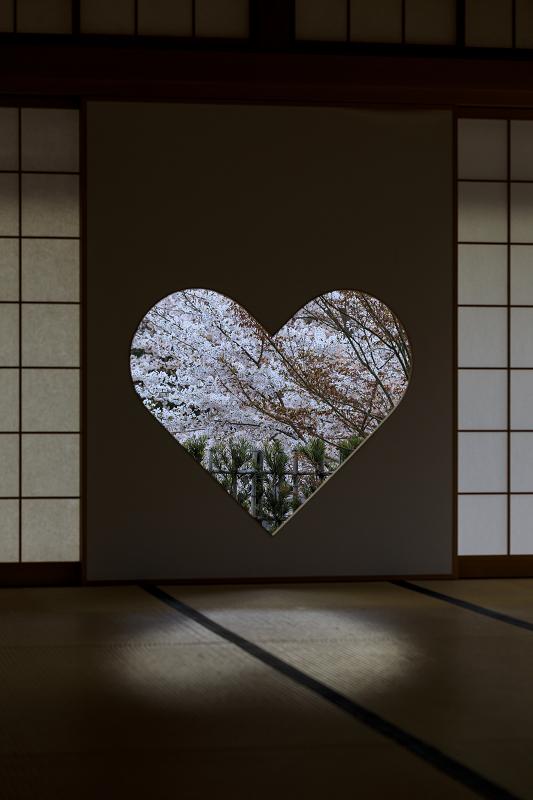 2020桜咲く京都 正壽院ライトアップ_f0155048_2354462.jpg