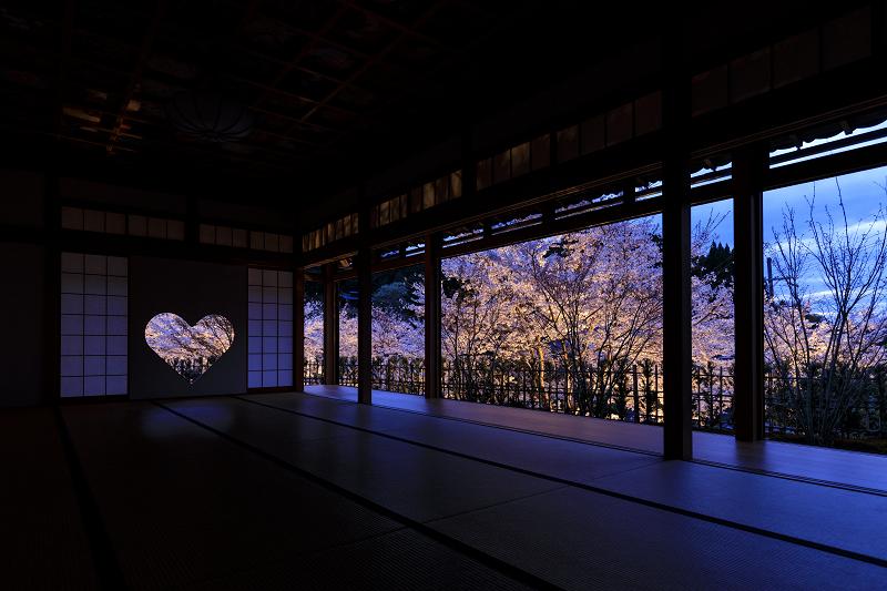 2020桜咲く京都 正壽院ライトアップ_f0155048_23551111.jpg