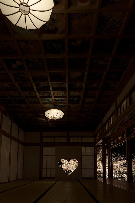 2020桜咲く京都 正壽院ライトアップ_f0155048_23565117.jpg