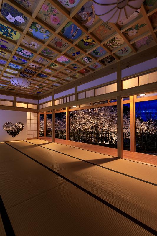 2020桜咲く京都 正壽院ライトアップ_f0155048_2356597.jpg