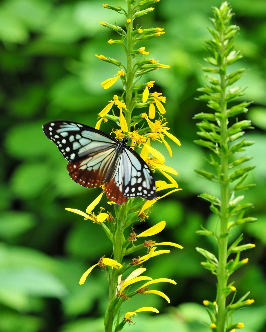 花から花へ ヒラヒラ系_c0305565_17451055.jpg