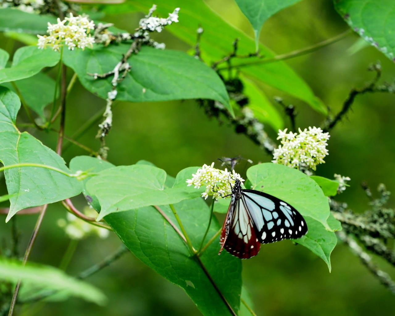 花から花へ ヒラヒラ系_c0305565_17464401.jpg