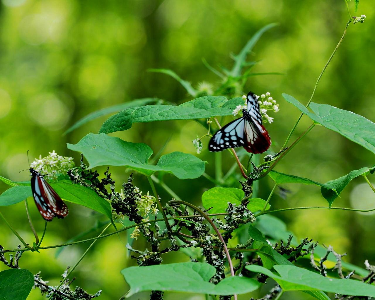 花から花へ ヒラヒラ系_c0305565_17473071.jpg