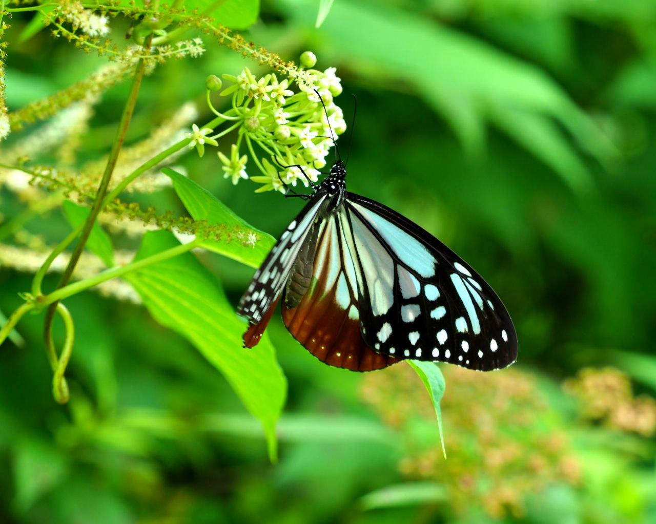 花から花へ ヒラヒラ系_c0305565_17483823.jpg