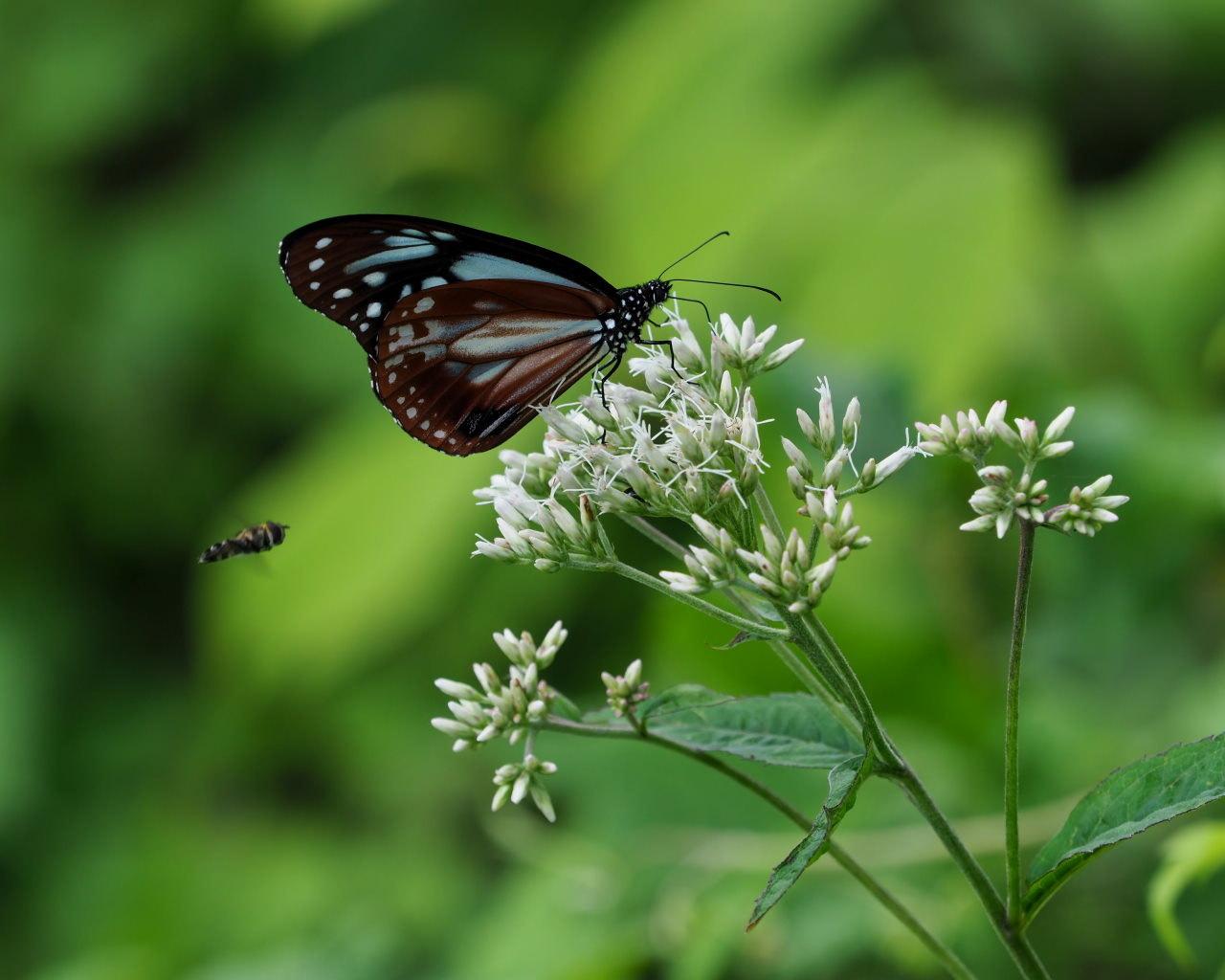 花から花へ ヒラヒラ系_c0305565_17504631.jpg