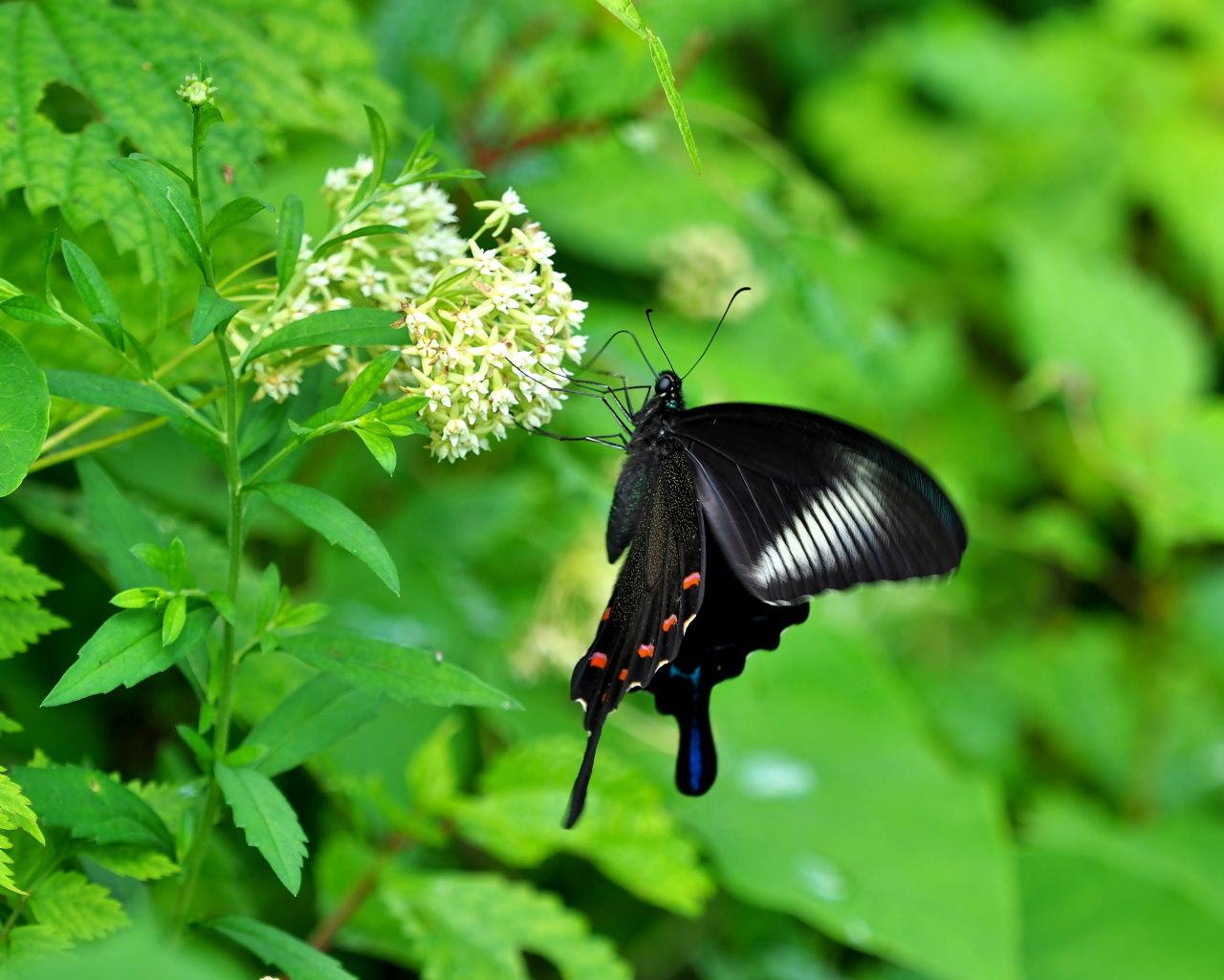 花から花へ ヒラヒラ系_c0305565_17534371.jpg