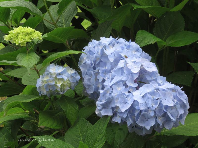 北海道の梅雨明けはいつ?_f0067179_16252085.jpg
