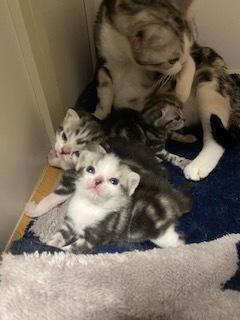 子猫生まれてます_c0105086_14425846.jpeg