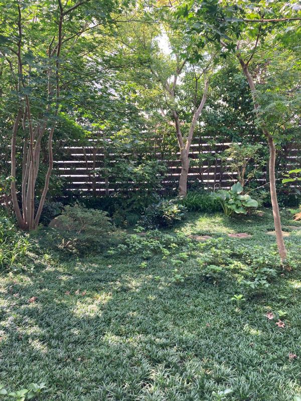夏の庭_d0345090_09055812.jpg
