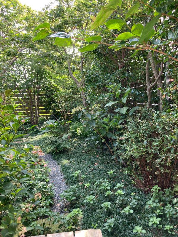 夏の庭_d0345090_09060328.jpg
