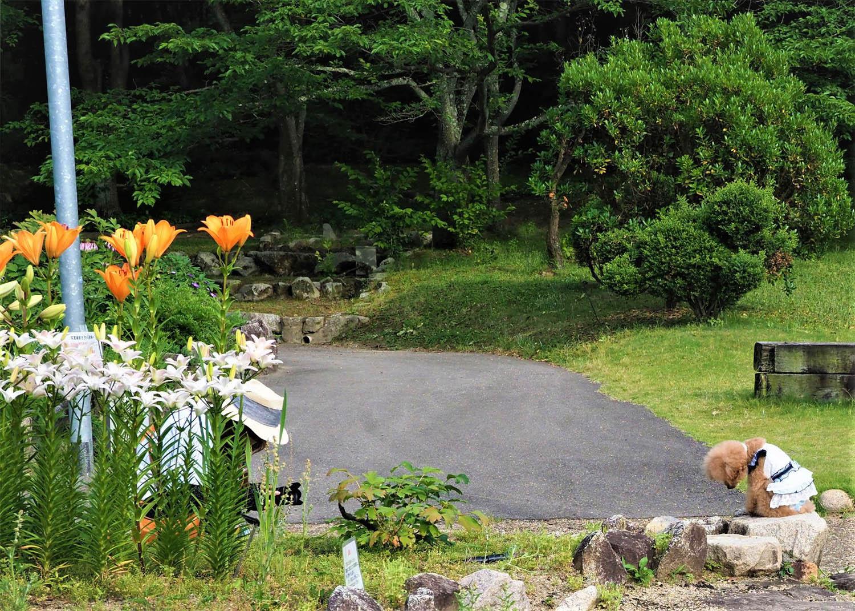 花の文化園_e0254493_23112640.jpg