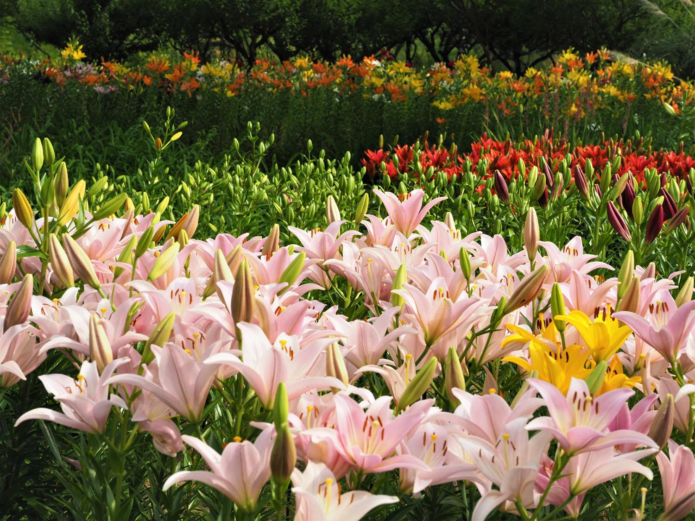 花の文化園_e0254493_23114773.jpg