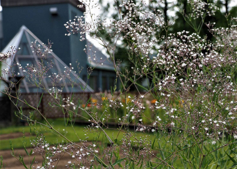 花の文化園_e0254493_23121666.jpg
