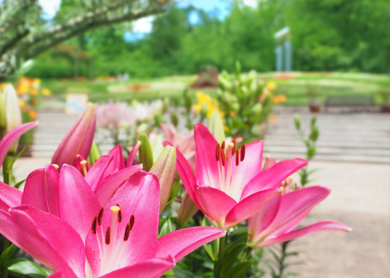 花の文化園_e0254493_2312247.jpg