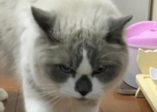 やさぐれ猫か!_d0344913_08322518.jpg