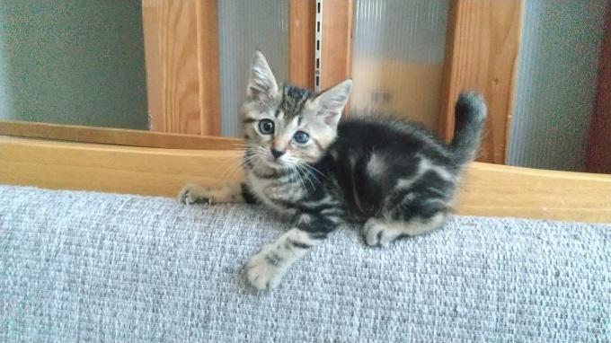 「8/7時点」子猫たち募集中/譲渡条件_b0235714_18521131.jpg