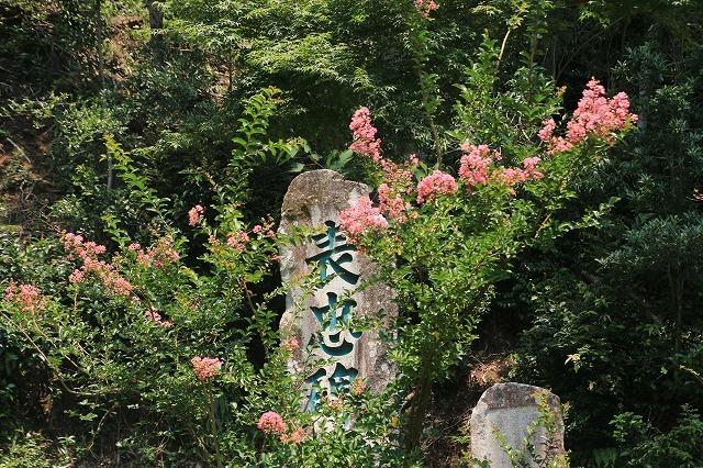 咲き誇る百日紅(八重垣神社)(撮影:8月5日)_e0321325_14162327.jpg