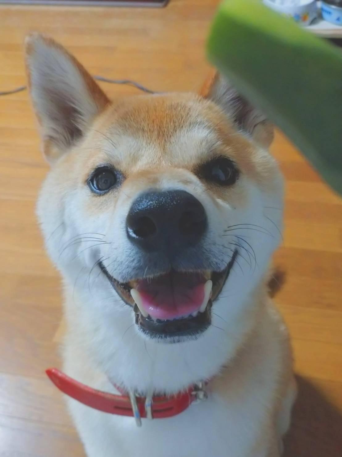 愛犬が尊い。_b0209638_13122528.jpg