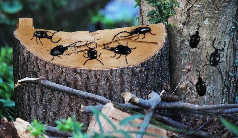 昆虫アート_b0330238_01001292.jpg