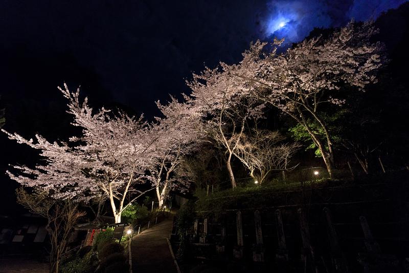 2020桜咲く京都 正壽院ライトアップ_f0155048_003993.jpg