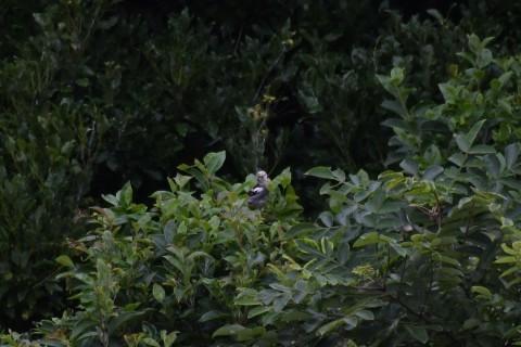 ★シギ類が増えてきました 葛西臨海・海浜公園全域調査結果_e0046474_11593450.jpg