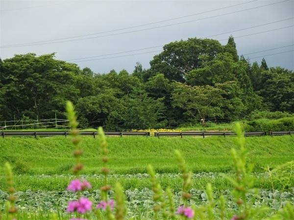 富士見町Tさん邸の現場より 3_a0211886_22582820.jpg